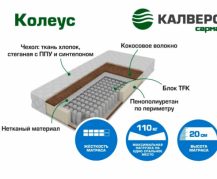 Koleys1-635x405